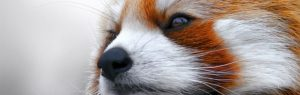 7 extensions Firefox incontournables
